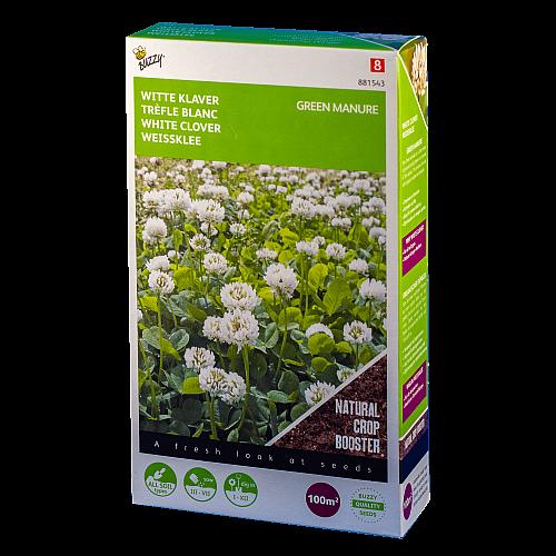 Witte klaver (Trifolium repens) Buzzy Green Manure